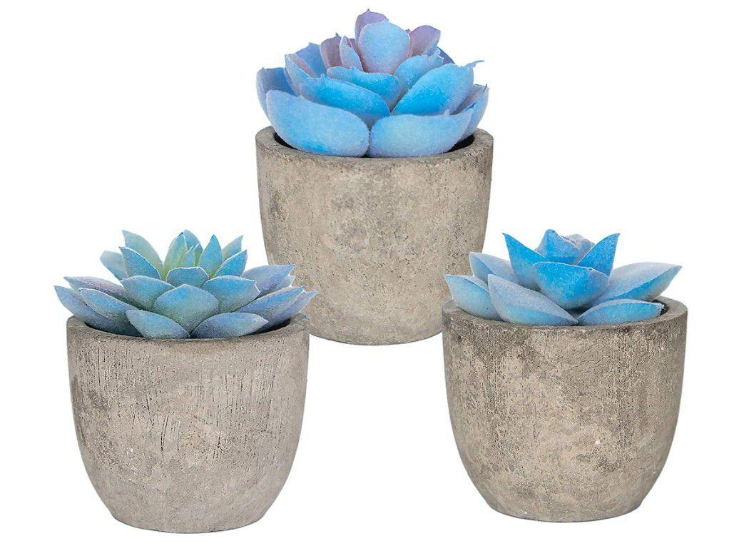 New Set 3 Greenery Mini Succulent Plants
