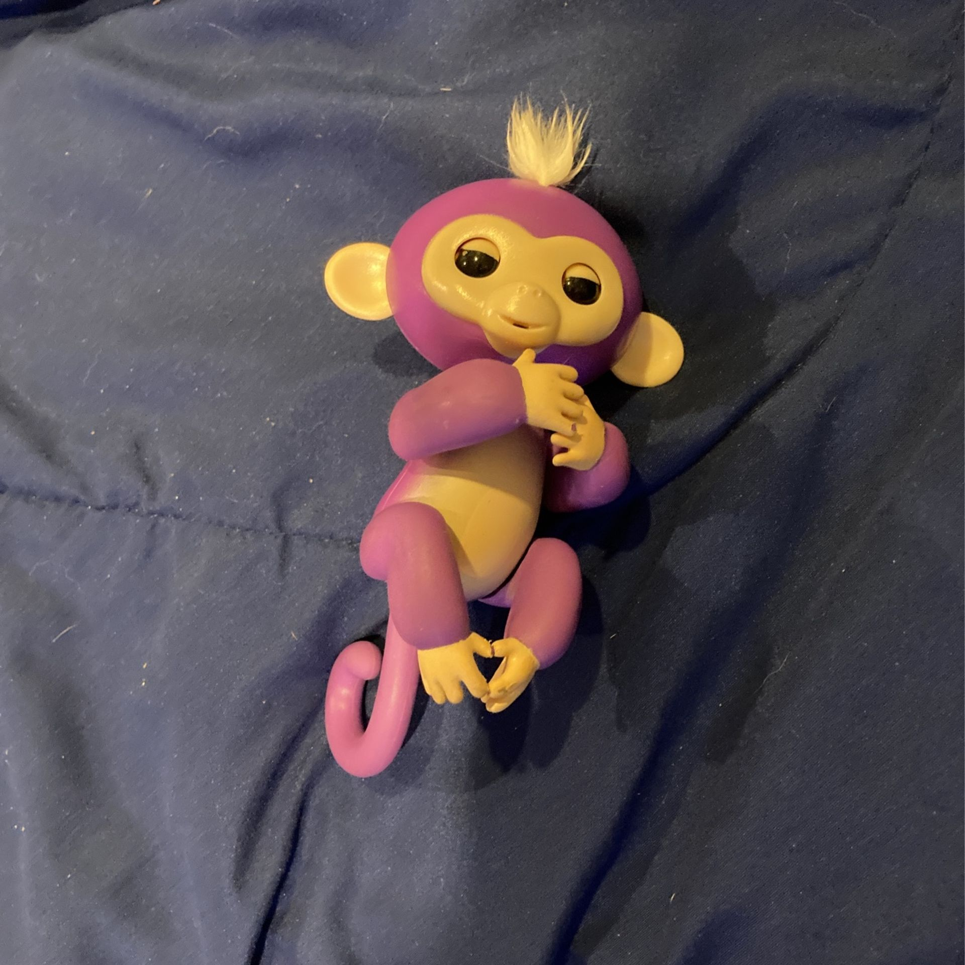 Fingerling Purple Monkey