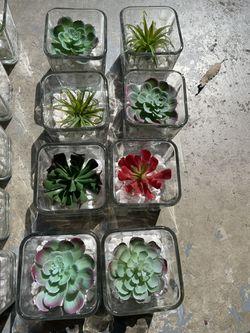 Faux Succulent Centerpieces/decor Thumbnail