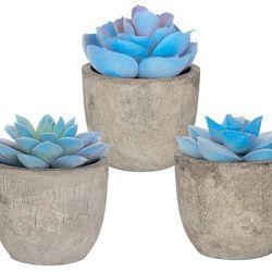 New Set 3 Greenery Mini Succulent Plants Thumbnail