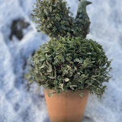 Topiary Peacock In Pot Thumbnail