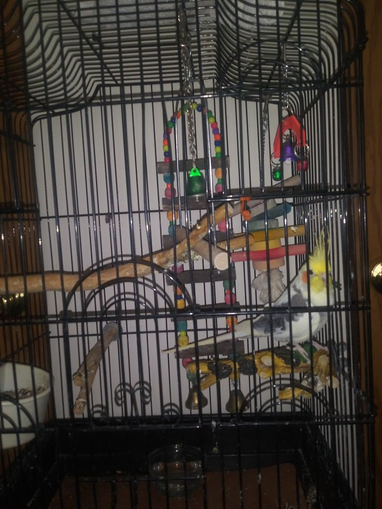 Bird... bird cage