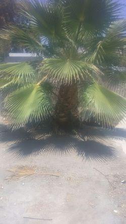 Palm tree Thumbnail