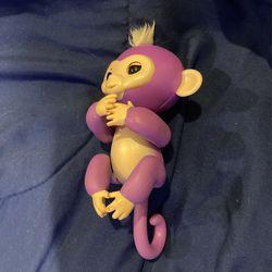 Fingerling Purple Monkey Thumbnail