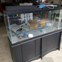 Fish Tanks ( 55 Gallon And 10 Gallon Curved Front) Thumbnail