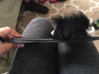 Furry slides Thumbnail