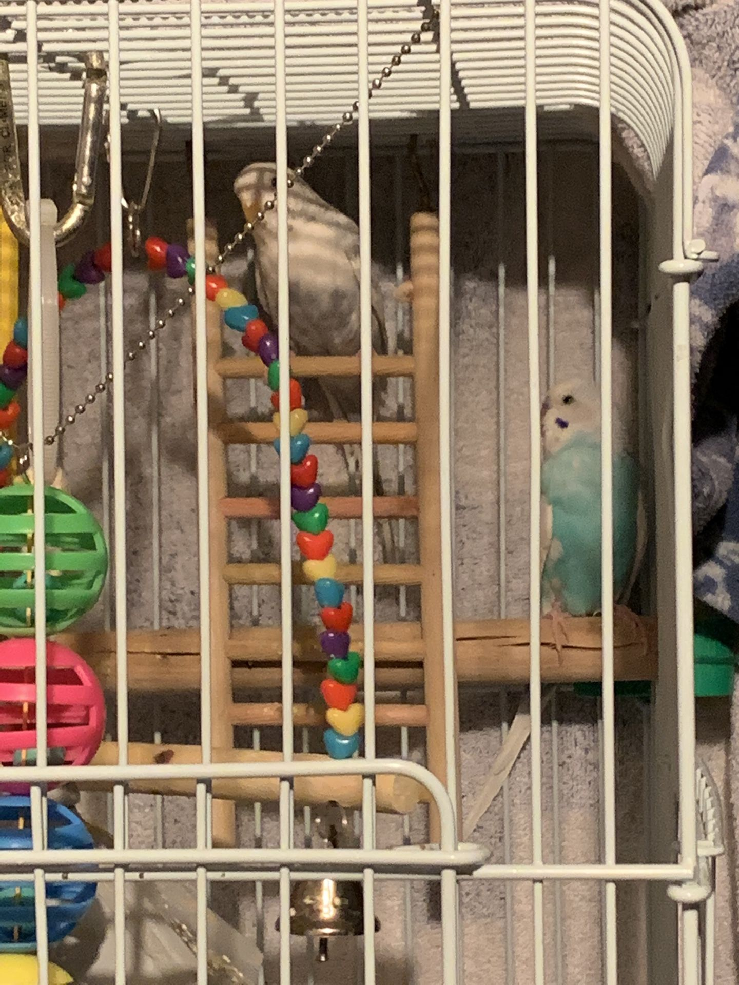 2 parakeets, the cage with stand and food