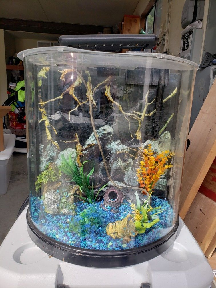 Fish Tanks ( 55 Gallon And 10 Gallon Curved Front)