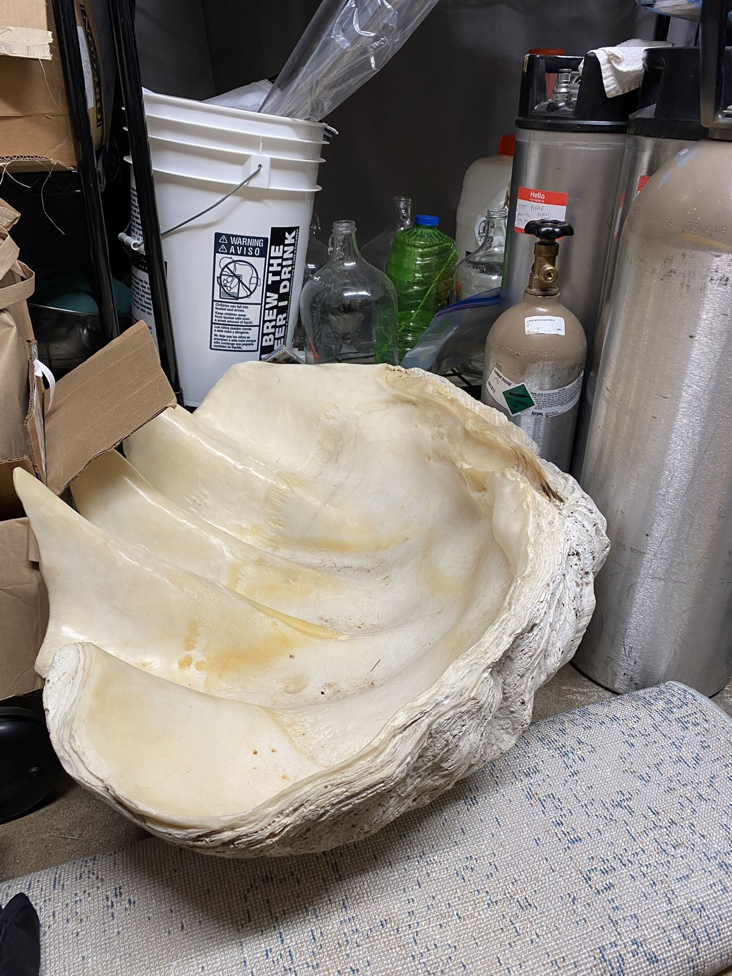 Giant Clam shell